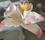 graces-orchid